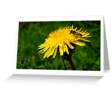 Hover fly and dandelion Greeting Card
