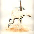 Demoiselle Cranes by J-C Saint-Pô
