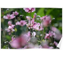 Beautiful pink blossoms  Poster