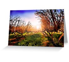 Vines at Fess Parker Winery Greeting Card