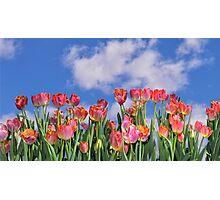 Tulips Galore Photographic Print