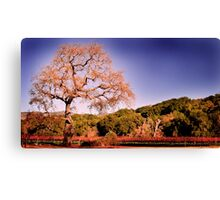 Beautiful view at Fess Parker Canvas Print