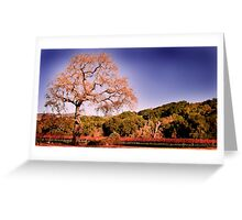 Beautiful view at Fess Parker Greeting Card