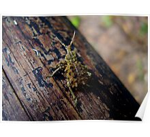 Unusual Bug Poster