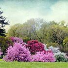 Cherry Orchard by Jessica Jenney