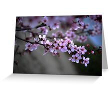 Cherry Blossoms of Spring Greeting Card