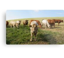 The Cow Police Metal Print