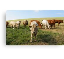 The Cow Police Canvas Print