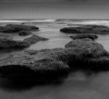 Black Seaweed by deannedaffy