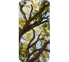 Branches of a Tree iPhone Case/Skin