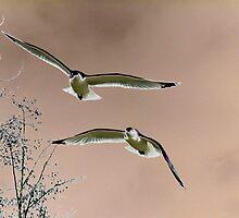 In Flight by Corey Bigler