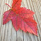Red and Green Leaf by lindsycarranza