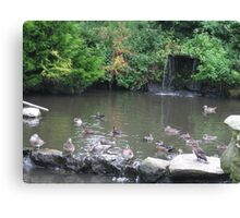 waterfall and birds Canvas Print