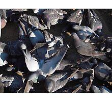 Mass of Pigeons Photographic Print