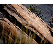 nature art #4, weathered tree trunk Photographic Print