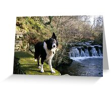 Indy at Nant-Y-Coed Greeting Card