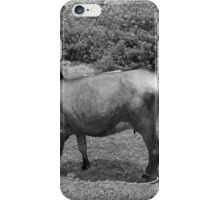 Cows in a Farmers Pasture iPhone Case/Skin