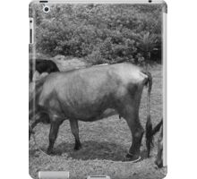 Cows in a Farmers Pasture iPad Case/Skin