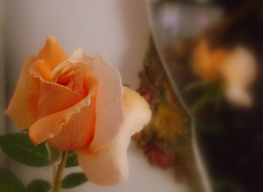 BRANDY ROSE by artist4peace
