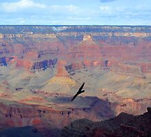 Soaring Over the Grand Canyon by Leona Bessey