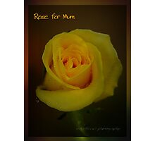 Rose For Mum © Vicki Ferrari Photographic Print
