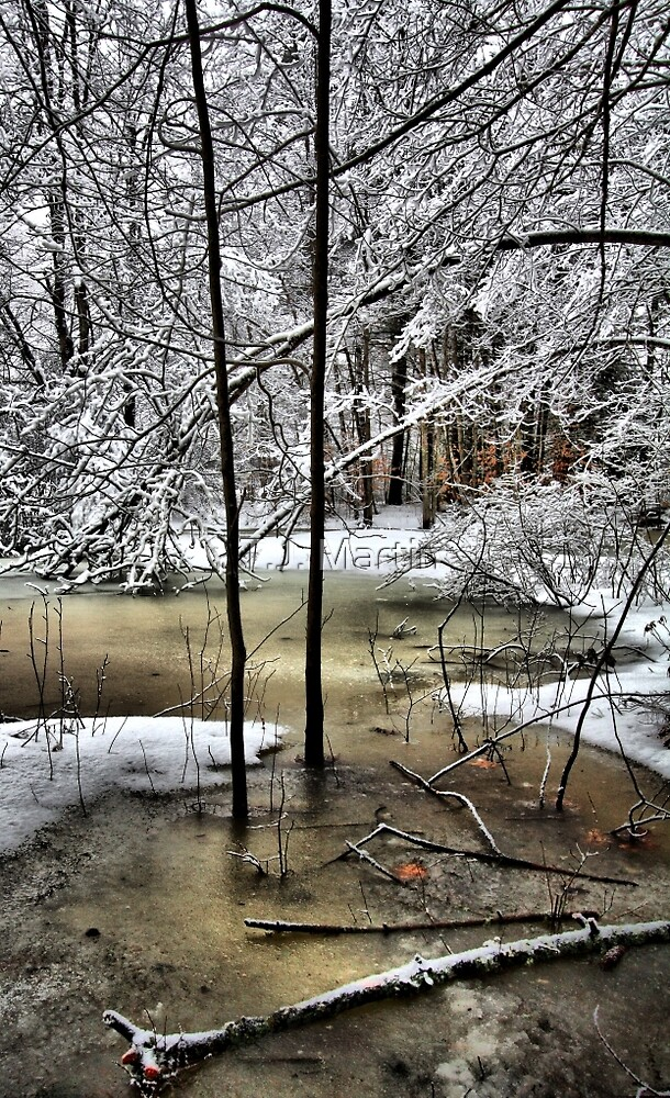 Late February Snowfall - A Hint of Color by T.J. Martin