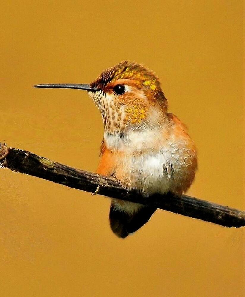 HUMMINGBIRD POSE by RoseMarie747