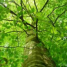 Green Tree  by manda76