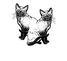 Double Cat! Photographic Print