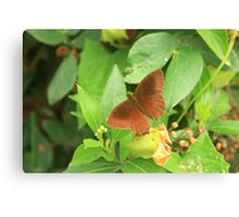 Brown Butterfly on a Leaf Canvas Print