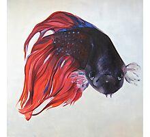 Zeta fish Photographic Print