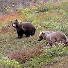 Two Bear Cubs by MichaelWilliams
