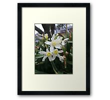 Spring Flora After the Rain Framed Print