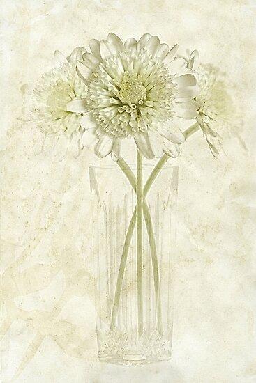 Groeni by John Edwards