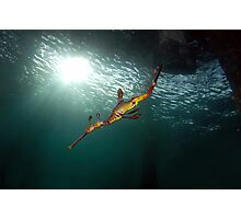 Seadragons & Sunshine Photographic Print