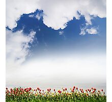 Spring tulips and cloudscape view Photographic Print
