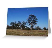 lonely trees Greeting Card