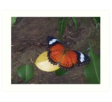 Fly,Butterfly,Fly Art Print