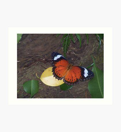 Fly,Butterfly,Fly Art Print