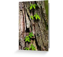 Vine on Bark Abstract Greeting Card