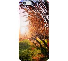 Vines at Fess Parker Winery iPhone Case/Skin