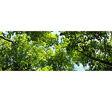 Green Forest Canopy Photographic Print