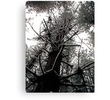 Thieves Wood III Canvas Print