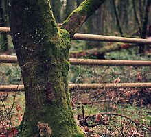 Fence in the Forest by Slight