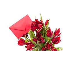 Red tulips flower post Photographic Print