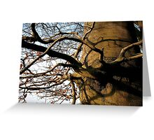 Autumn in Thieves Wood Greeting Card