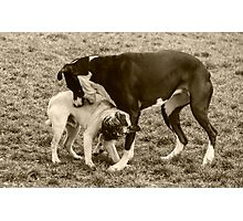 Yes! That's the Spot! Chew Right There! Photographic Print