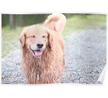 Golden Smile Poster