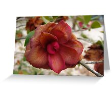 Frost-touched Camellia Greeting Card
