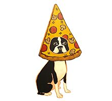 Boston Terrier Pizza Dog Photographic Print